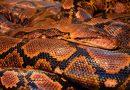Différence entre Python et Anaconda